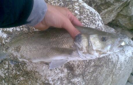 דיג בגשם