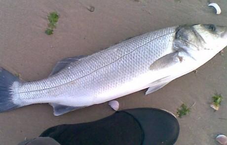 דיג בצהרי היום