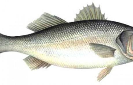 11 מסקנות בנושא דיג לברקים