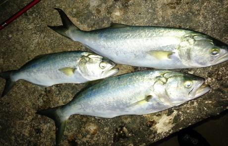 דיג בשפל