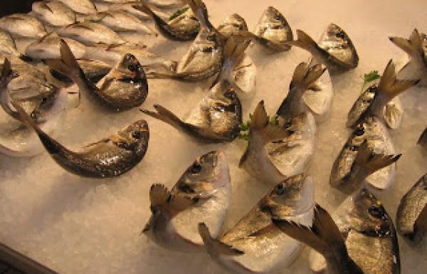 ריגור מורטיס- על קישיון המוות, ריר וטיפול בטפילים בדגים